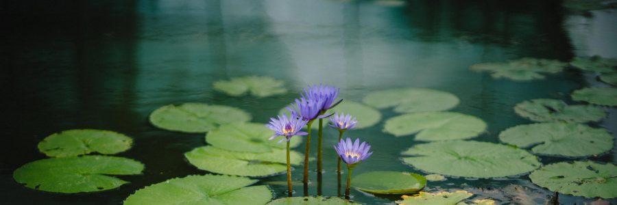 Neurofeedback And Meditation