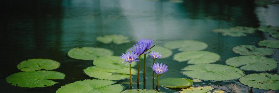 Benefits of Meditation And Neurofeedback
