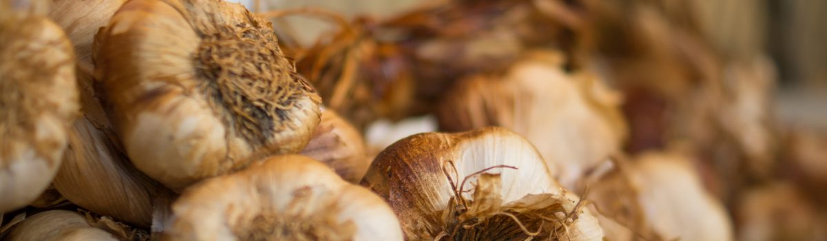Garlic…a brain poison?